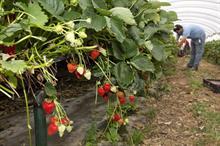 Farm labour exempt from coronavirus quarantine crackdown